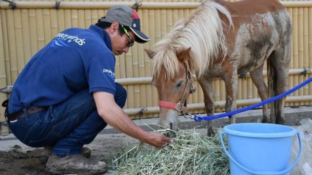 kuda poni ini selamatkan diri di atap (photo: AsiaWire/Metro.co.uk)