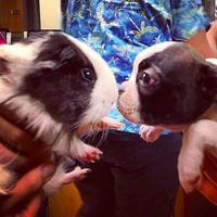 Meski berbeda jenis, kamu bisa tertipu dengan kemiripan hewan-hewan ini.| Via: boredpanda.com