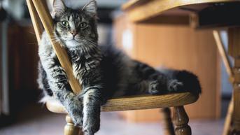 15 Cara Merawat Kucing untuk Pemula, Penuhi Kebutuhannya