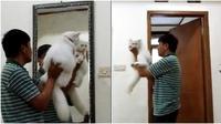 Bapak-bapak dengan kucing (Sumber: Twitter/qolbysyifa)