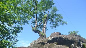 Legenda Pangeran Mangkubumi di Balik Batu Keramat yang Tak Bisa Dipindah di Sragen