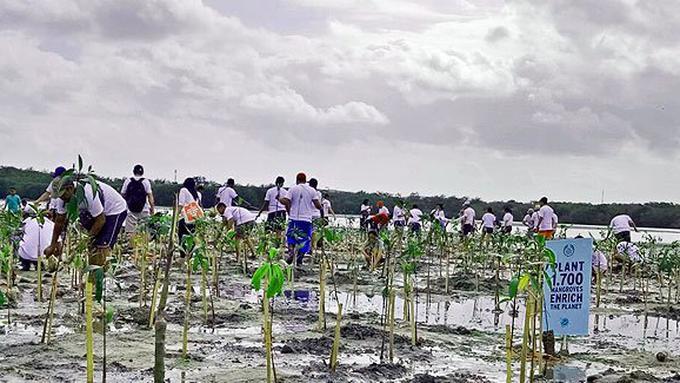 Tanam 1700 mangroves bareng The Body Shop Indonesia/Copyright Vemale.com