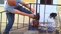 Saksikan bagaimana anak laki-laki ini akhirnya bisa terbebas dari jepitan jeruji pagar tangga.