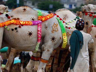 Unta-Unta di Pakistan Didandani untuk Menarik Pembeli