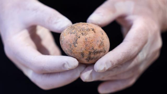 Arkeolog menunjukkan telur ayam berusia 1.000 tahun yang ditemukan selama penggalian di Kota Yavne, Israel, Rabu (9/6/2021). Telur ayam yang hampir utuh tersebut ditemukan baru-baru ini di sebuah tangki septik. (Emmanuel DUNAND/AFP)