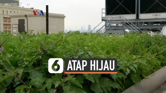 Budidaya sayur mayur dan buah-buahan bukan hanya dilakukan di kawasan pedesaan, tapi juga bisa di kota-kota besar. Selain kebun vertikal yang dibuat di dalam ruangan, banyak yang kini mengembangkan perkebunan di atap gedung tinggi, sehingga juga memb...
