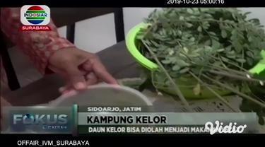 Sebuah kampung di Sidoarjo, Jawa Timur, hampir seluruh warganya menanam pohon kelor di pekarangan rumahnya. Bahkan, daun kelor tersebut oleh masyarakat, diolah menjadi berbagai makanan dan minuman.