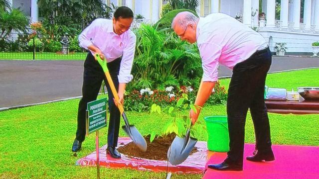 Presiden Jokowi mengajak PM Australia Scott Morrison menanam pohon di Istana Bogor