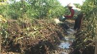 Petani terpaksa harus menggunakan mesin pompa air untuk menyedot air ke sawah yang jaraknya mencapai 300 meter.