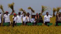 Menteri Pertanian Andi Amran Sulaiman melakukan panen raya padi di Kolaka, Sulawesi Tenggara.