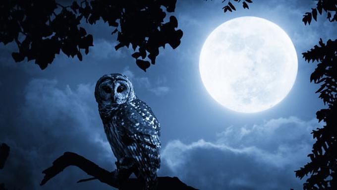 Apakah Makna Mimpi Melihat Bulan Fimela Fimelacom