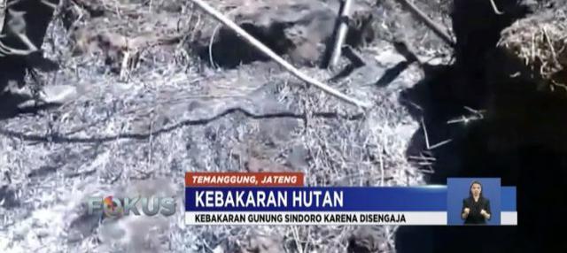 Dua dari lima titik api di lereng Gunung Sumbing telah padam berkat water bombing.