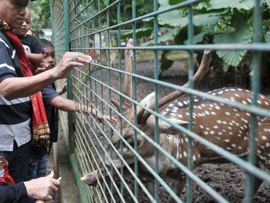 Sejumlah pengunjung memberi makan Rusa di Kebun Binatang Ragunan, Jakarta Selatan, Senin (12/12). Libur Maulid Nabi Muhammad SAW, Kebun Binatang Ragunan diserbu warga yang ingin menikmati waktu libur bersama keluarga. (Liputan6.com/Yoppy Renato)