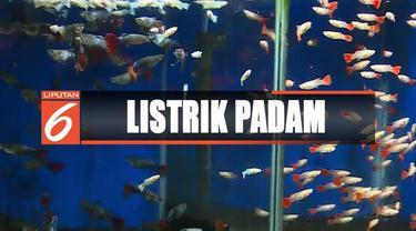 Ikan-ikan terancam mati apabila hidup tanpa filter dan oksigen selama lebih dari 3 jam.