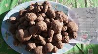 Potensi hutan Garut yang masih luas, bisa menjadi salah satu alternatif penanaman tanaman porang sebagai penghasil umbu-umbian tersebut. (Liputan6.com/Jayadi Supriadin)