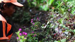 Petugas memperhatikan kupu-kupu yang hinggap pada bunga di Taman Kupu-Kupu Kalimalang, Jakarta Timur, Jumat  (4/1). Taman Kupu-Kupu Kalimalang memanfaatkan Ruang Terbuka Hijau (RTH) yang tidak terpakai. (Merdeka.com/Imam Buhori)