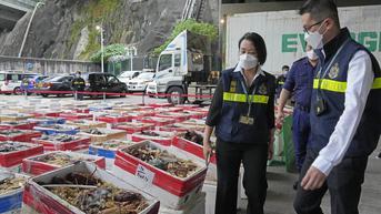 China Sita Lobster Impor dari Australia Senilai Rp 10 M, Imbas Perang Dagang