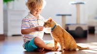 Ilustrasi memberikan kucing makan. (Dok. worldsbestcatlitter)