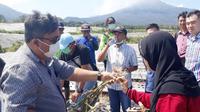 Demi mencapai kemandirian bawang putih tahun 2021, Kabupaten Banyuwangi kini menjadi salah satu sentra pengembangan bawang putih yang dicanangkan Kementerian Pertanian (Kementan).