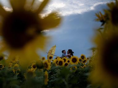 Orang-orang mengunjungi tanaman bunga matahari di ladang bunga Nokesville, Virginia pada Kamis (22/8/2019). (Photo by Brendan Smialowski / AFP)