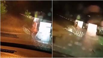 Viral Seekor Buaya Berkeliaran di Tengah Jalan, Bikin Warga Panik