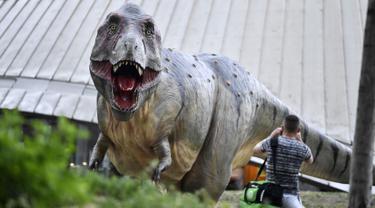 Seorang pria berdiri di depan replika dinosaurus Tyrannosaurus Rex seukuran aslinya di pusat kota Bochum, Jerman (12/8/2019). Pameran ini menampilkan 33 replika dinosaurus di sekitar pusat kota, berada di Bochum. (AP Photo/Martin Meissner)