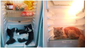 6 Potret Kucing di Dalam Kulkas Ini Bikin Tepuk Jidat, Bak Main Petak Umpet