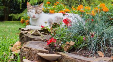 Catnip, Tanaman Rahasia yang Bikin Kucing Bahagia