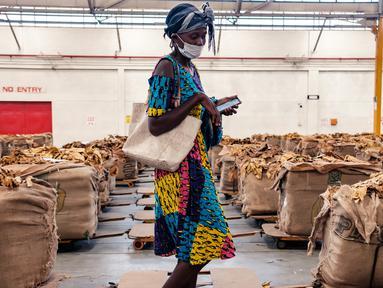 Seorang petani tembakau mencari balnya selama pembukaan resmi musim penjualan tembakau di Lantai Penjualan Tembakau, Harare, Zimbabwe, 7 April 2021. Musim penjualan tembakau tahun ini dihadiri sedikit petani karena pembatasan COVID-19. (Jekesai NJIKIZANA/AFP)