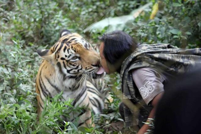 Sholeh yang sangat dekat dengan harimau peliharaannya | Photo: Copyright merdeka.com