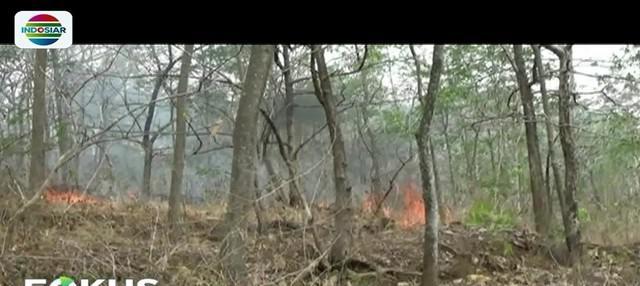 Api yang membakar belasan hektar lahan hutan jati di Ponorogo, Jawa Timur, hingga kini  belum bisa dipadamkan. Kebakaran bahkan terus meluas hingga mendekati permukiman warga.