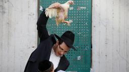 Pria Yahudi ultra-Ortodoks memegang ayam saat melakukan ritual Kaparot, di Bnei Brak, Israel, (9/10). Dalam ritual ini ayam putih disembelih sebagai syarat simbolis dari penebusan. (REUTERS/Baz Ratner)