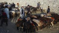 Pedagang memajang hewan ternak yang dijual jelang Hari Raya Idul Adha di Kabul, Afghanistan, Senin (27/7/2020). Idul Adha memperingati kisah Nabi Ibrahim atas kesediaan untuk mengorbankan putranya sebagai kepatuhan kepada Tuhan. (AP Photo/Rahmat Gul)
