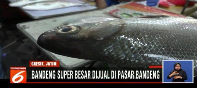 Pasar Bandeng Kawak yang digelar hanya sekali setahun ini selalu ditunggu warga Gresik untuk mendapatkan bandeng yang ukurannya super besar.