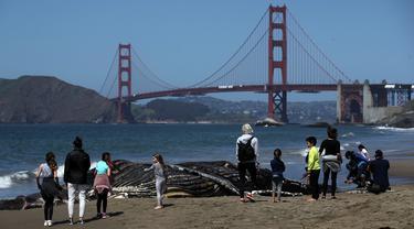 Para pengunjung pantai melihat Paus Humpback remaja yang mati di Pantai Baker di San Francisco, California (21/4/2020). Para ilmuwan dengan Pusat Mamalia Laut melakukan necropsy parsial pada Paus Bungkuk Humpback remaja yang membusuk di dekat Jembatan Golden Gate. (Justin Sullivan/Getty Images/AFP)