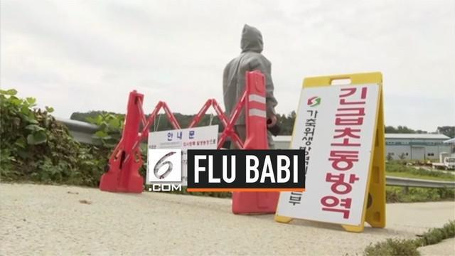 Pemerintah Korea Selatan mengkonfirmasi temuan virus Babi Afrika di negaranya. Akibatnya permerintah Korsel bakal membunuh ribuan babi di pekarangan yang terjangkit virus mematikan itu.