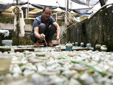 Pria Hanoi Budi Daya Ikan Cupang dengan Botol Bekas