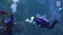 Penyelam melakukan atraksi menyundul bola di dalam aquarium Sea World, Jakarta, Sabtu (16/6). Atraksi tersebut digelar dalam rangka menyemarakkan ajang Piala Dunia 2018 yang berlangsung di Rusia. (Liputan6.com/Immanuel Antonius)