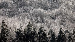Pohon-pohon tertutup salju saat musim dingin di West Orange, New Jersey (18/12/2019). Suhu dingin tersebut diharapkan turun pada Kamis pagi. (Rick Loomis/Getty Images/AFP)