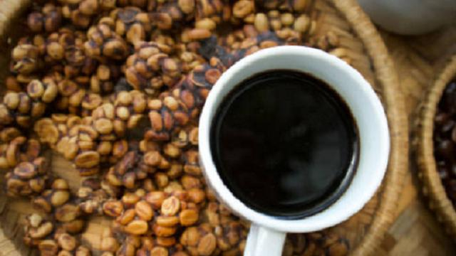 Ilustrasi kopi luwak (iStock)