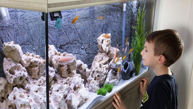 Cara Membuat Aquarium Unik Agar Sudut Ruangan Menjadi Lebih Hidup