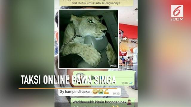 Seorang sopir taksi online kaget bukan main saat mendapat pesanan dan diminta mengantar singa ke Taman Safari.