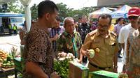 Bupati Cirebon Imron Rosyadi saat meninjau persiapan ekspor Mangga Gedong Gincu ke Timur Tengah. Foto (Liputan6.com / Panji Prayitno)