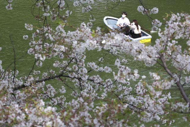 Orang-orang yang memakai masker menikmati mekarnya bunga sakura dari perahu dayung di Tokyo, Senin (29/3/2021). Menyaksikan sakura dari atas perahu dayung sambil menyusuri aliran sungai memberikan pengalaman berbeda. (AP Photo/Koji Sasahara)