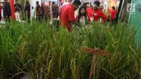 Sejumlah peserta Rakornas PDI Perjuangan melihat pameran di ICE BSD, Tangerang Selatan, Sabtu (16/12). Pameran tersebut menyuguhkan prodak pertanian perternakan dan UMKM prodak lokal. (Liputan6.com/Angga Yuniar)