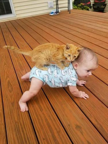 10 Tingkah Unik Kucing yang Bikin Nggak Habis Pikir