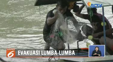Lumba-lumba yangs empat tersasar di Sungai Kualuah, Labuan Batu, telah dievakuasi BKSDA Sumatra Utara.