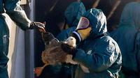 Pekerja membawa bebek untuk dimasukan ke dalam tempat sampah berisi gas beracun di peternakan unggas di Latrille, Prancis, (6/1). Pemusnahan besar-besaran ini dilakukan di tiga daerah yang paling terpengaruh oleh wabah flu burung. (AP Photo/Bob Edme)