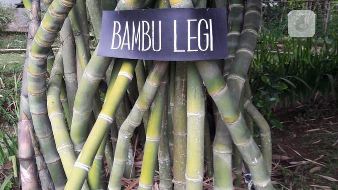 Selamat menikmati kesejukan di bawah rumpun bambu. (foto: Liputan6.com/edhie prayitno ige)