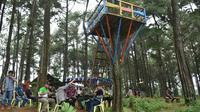Pegunungan Pinus di Batang. (Liputan6.com/Fajar Eko Nugroho)